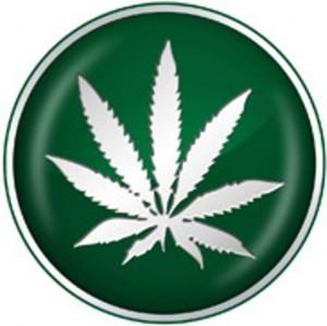 Government Marijuana